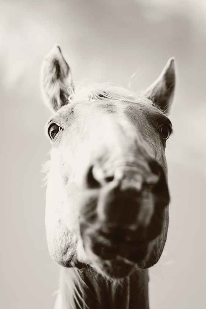 grey scale photography of horse s face