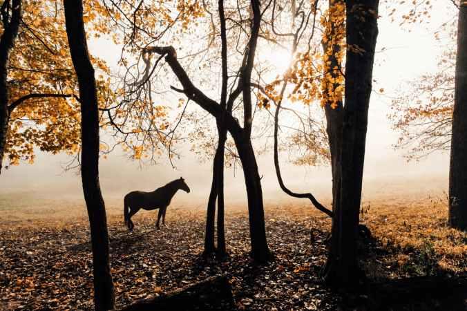 horse near trees
