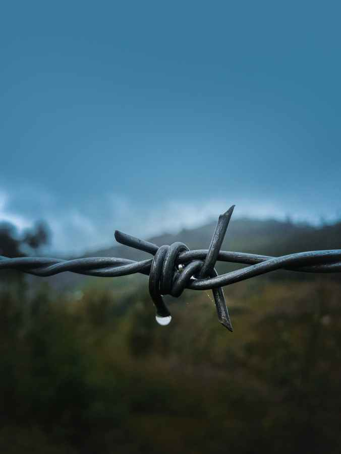 shallow focus photo of barbed wire